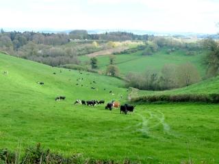 our-farm1